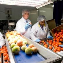 Tomapure: tout pour la sécurité alimentaire's Vignette